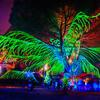 Psychedelic Tree of Life